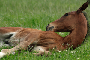 Foal stock 101 by Bundy-Stock