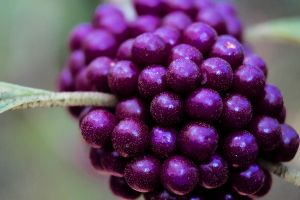 Purple by ChaoticMind-Photos