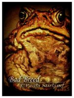 Bad Breed by hatefueled