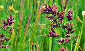 Green grasses 5 by rosetrace