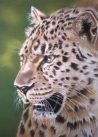 Leopard pastel drawing by donnabe