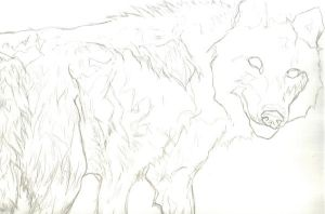 Wolf WIP by xLithium0509