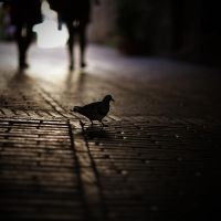 walking by the street by bagnino