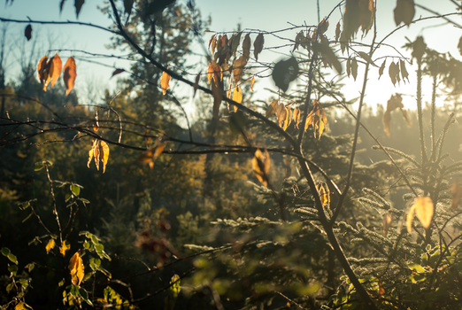 Fall Morning by alexettinger