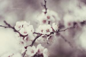 white dream by Paulinaz