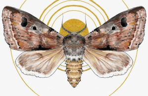 Moth in the Moon by Emphasized