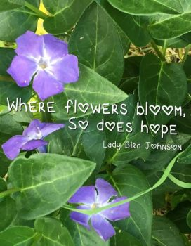 Purplethorn Picture Quotes: Hope by PurpleThorne