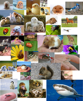 Collage of cute animals. by Harejules