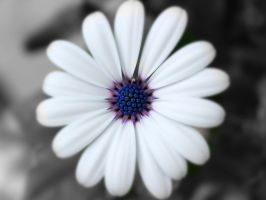 delicate too by Magnius159