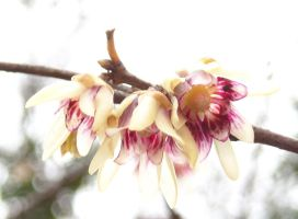Wintersweet ghost by TinyWild