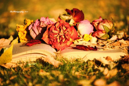 Fall Reading by PhotographsByBri