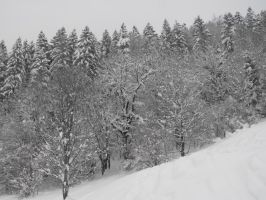 Snowy forest of Grande Charteuse 6 by A1Z2E3R