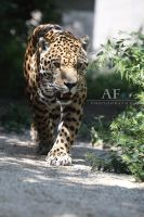Pure elegance by AF--Photography