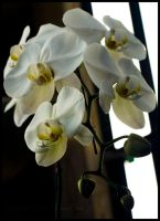 Orchids in the Lobby I by urnightmare