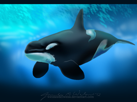 Flute The Orca Hybrid by WeisseEdelweiss