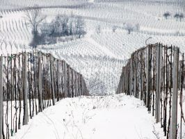 Neve sulle colline Piacentine by Hi-Teck