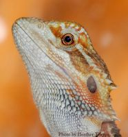 Squirt Portrait by HeatherTelesca