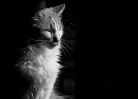 Contemplation Kitty by tleach0608