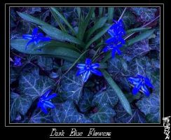 Dark Blue flowers by begrim