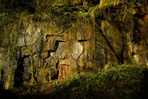 Sunlit woodland quarry by A68Stock