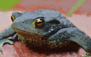 Froggy by Chewfie