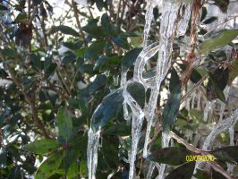 Icicles on a bush by TheRedPlumBlossom
