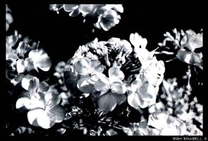 flowers 2 by roundy666