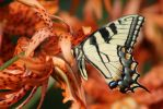 Tiger Swallowtail by freespiritmissy