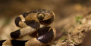 Tiny Snake by GeorgeAmies