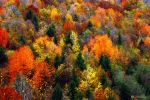 Colorful season by adypetrisor