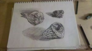 Sketchbook Page Shells by digistyle