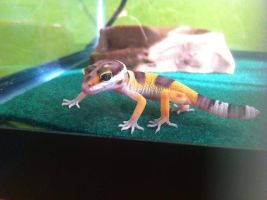 The Leopard Gecko Named Pandora by Misha-needs-love