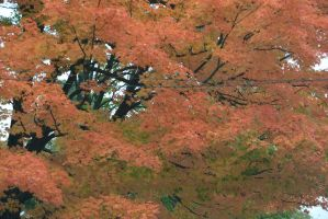 2014 Natural Autumn Color by Miss-Tbones