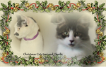 Christmas Cats toni and Charlie by Undead-Academy