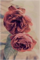 rose pair re-uploaded by miss-lubnA