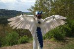 Shiron feeling the wind by benzene66