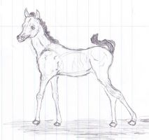 Foal Sketch by caitiedidd