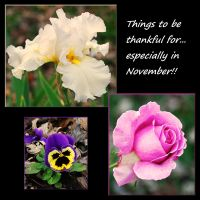 Things to be thankful for... by LadyAliceofOz