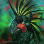 PalmCockatoo hippogriff by Tidma