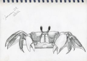 Ghost Crab by EchoingDroplet