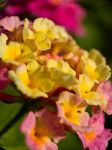 Macro Flowers 4 by PhotographybyVictor