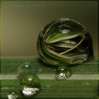 grassfilled droplet by webcruiser
