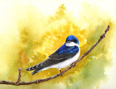 Tree Swallow by snowbringer