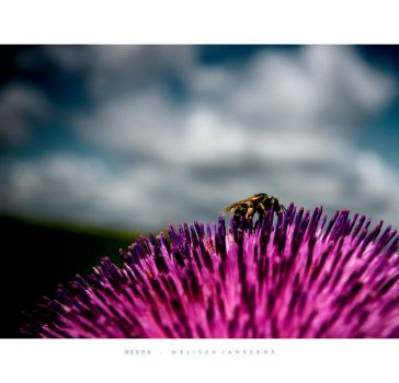 Bee and Thistle by Konijntje