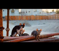 Urban Cats - 12 by MARX77