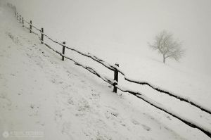 fences 4 by adypetrisor