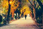 Walk in the park by sican