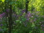 Wildflowers by AllStock