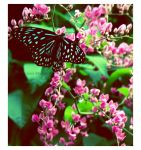 Butterfly 1 by EnigmaticEntity