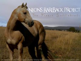 Neon's RareBack Project by Horse-Graphix-AMS